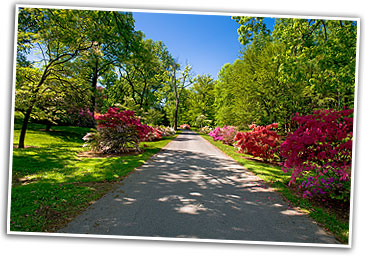 Azaleas in bloom at the historic Rosemont Manor: A Virginia Bed and Breakfast